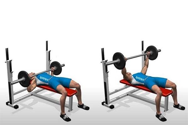 پرس هالتر و افزایش وزن با ورزش